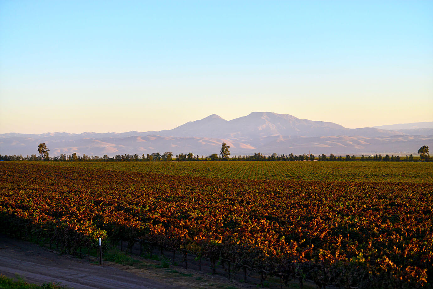 Photo of Mesa del Rio Vineyard